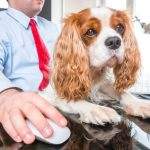 7 einfache Verhaltensregeln: So klappt die Zusammenarbeit mit dem Büro-Hund
